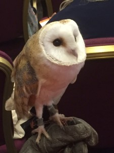 Orchid the Owl